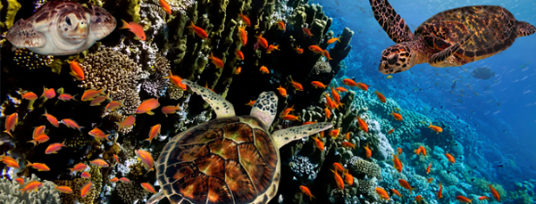Why Explore The Galapagos?