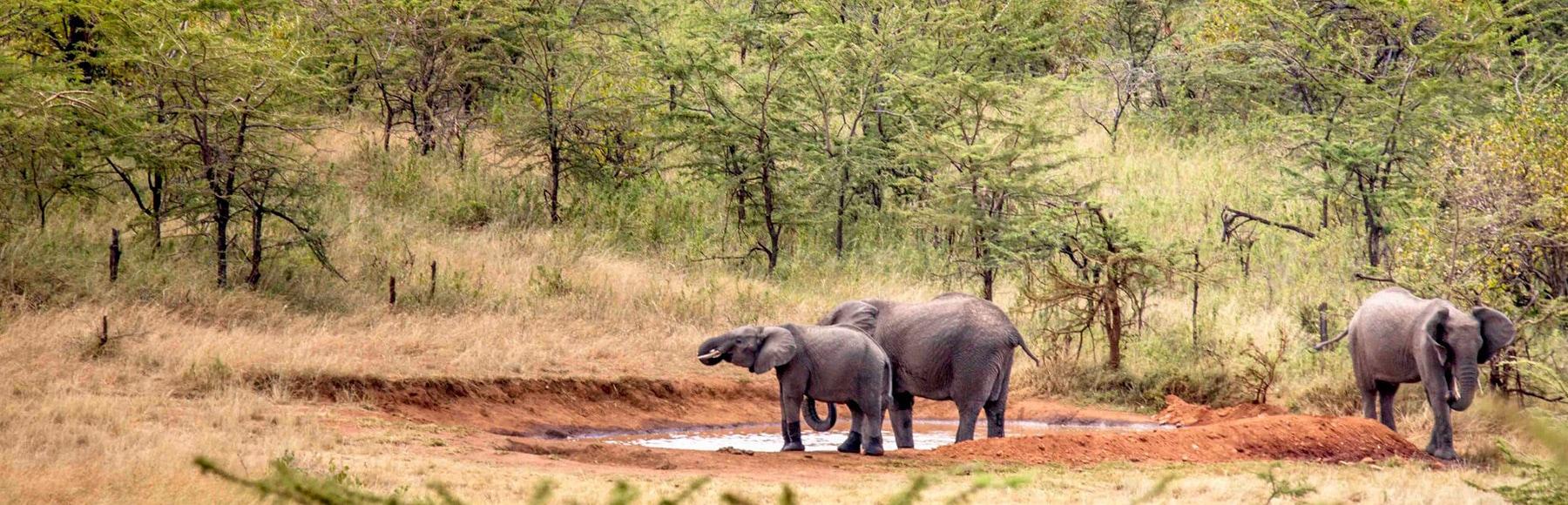 banner-elephant-trails-2