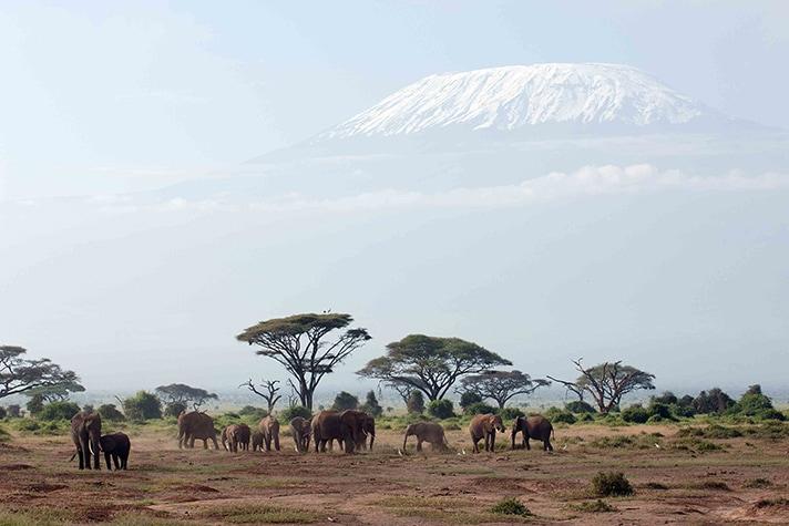 day-1-arrival-nairobi-and-your-safari-begins