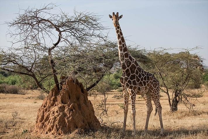 day-3-on-safari-in-shaba