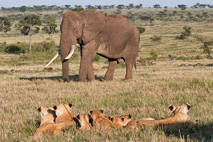 day-3_4-on-safari-in-the-masai-mara-national-reserve