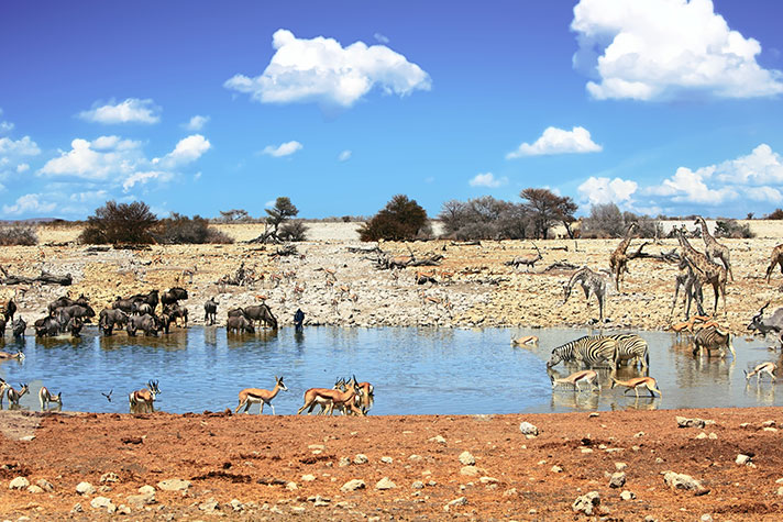img-itinerary-african-day-5-etosha-national-park