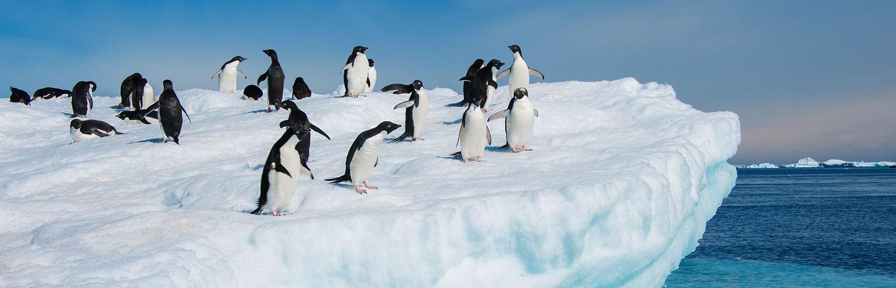 banner-frozen-land-of-penguins-jpg