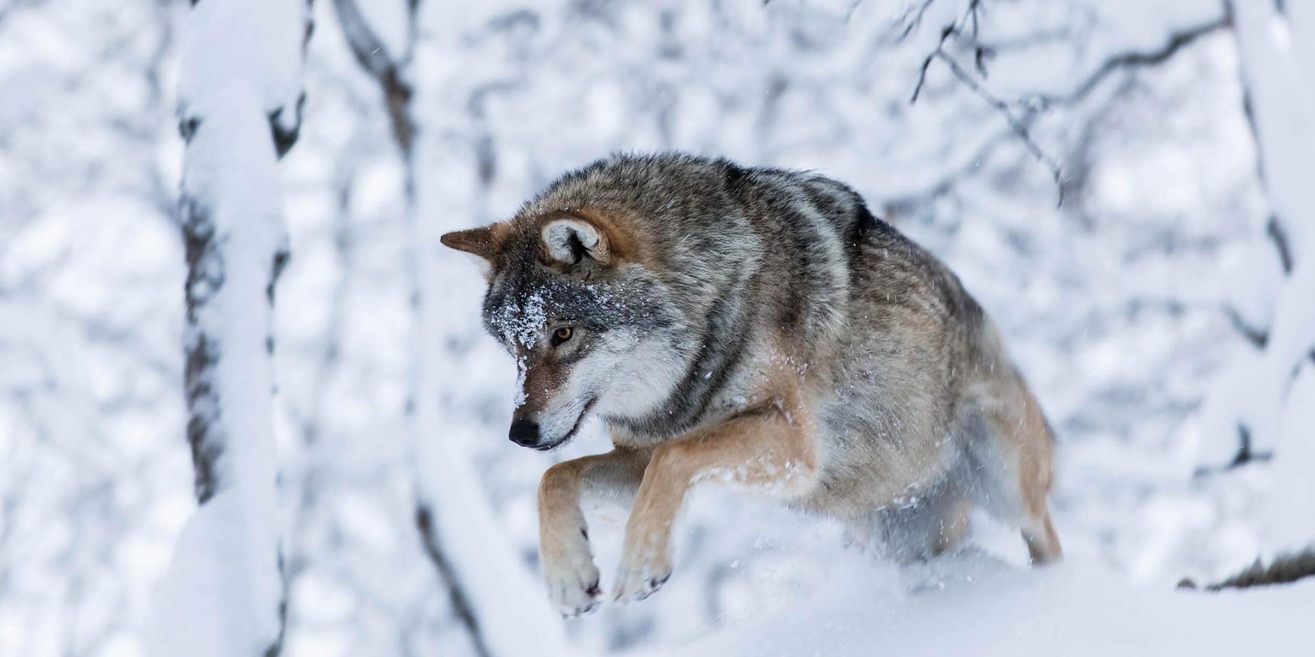 polar_parkeckhoff_2500x1250