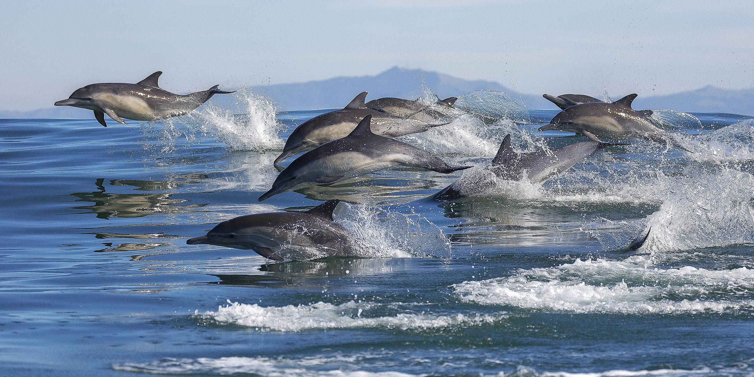 day-4_at-sea_-dolphins_shutterstock_568089433