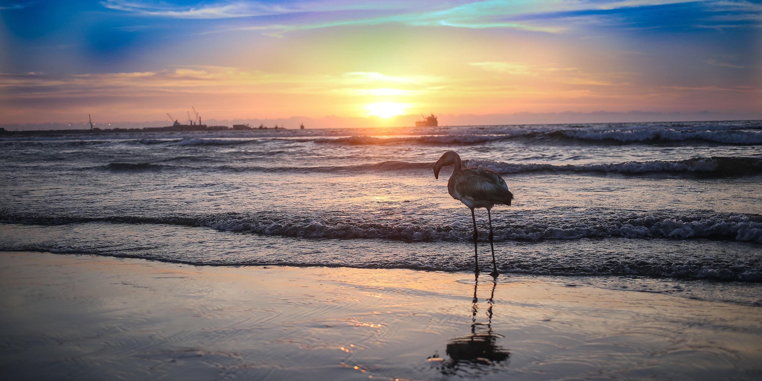 day-5_arica-arica-beach_shutterstock