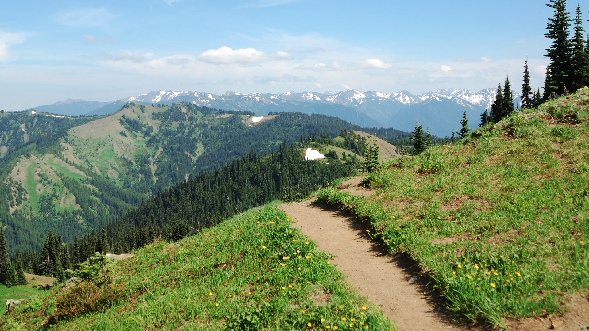 day-8_hurricane-ridge_olympic-national-park_hiking-trail_shutterstock_39211195